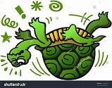 aaa turtle back